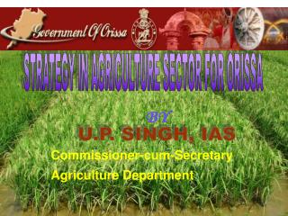 STRATEGY IN AGRICULTURE SECTOR FOR ORISSA