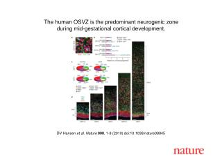 DV Hansen  et al. Nature 000 , 1-8 (2010) doi:10.1038/nature08845