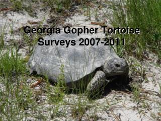 Georgia Gopher Tortoise Surveys 2007-2011