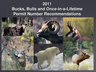 2011  Bucks, Bulls and Once-in-a-Lifetime  Permit Number Recommendations