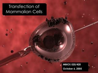 Transfection of Mammalian Cells