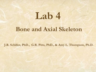 Chapter 6: Bone tissue