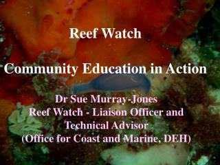 Reef Watch Community Education in Action