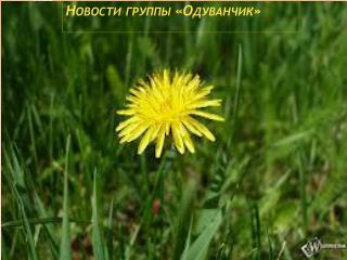 Новости группы «Одуванчик»