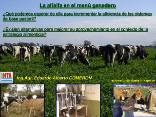 La alfalfa en el menú ganadero