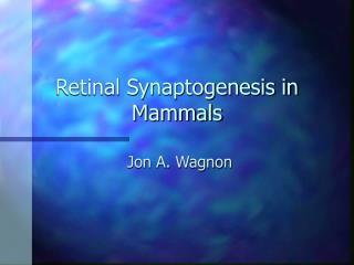 Retinal Synaptogenesis in Mammals