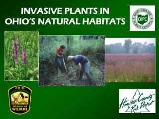 INVASIVE PLANTS IN OHIO�S NATURAL HABITATS