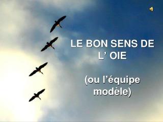 LE BON SENS DE L'  OIE (ou l'équipe modèle)