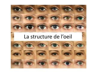 La structure de l'oeil