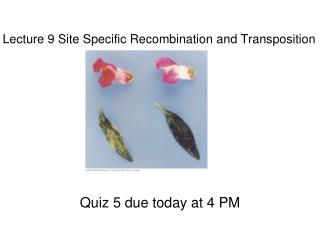 Lecture 9 Site Specific Recombination and Transposition