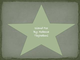 Island Fox By: Rebecca Taghaboni