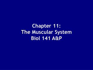 Chapter 11: The Muscular System Biol 141 AP