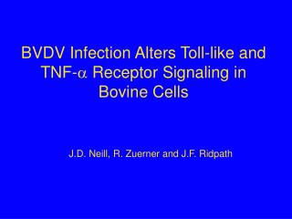 BVDV Infection Alters Toll-like and TNF-  Receptor Signaling in Bovine Cells