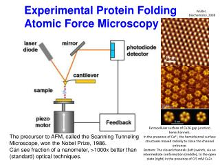 Experimental Protein Folding Atomic Force Microscopy