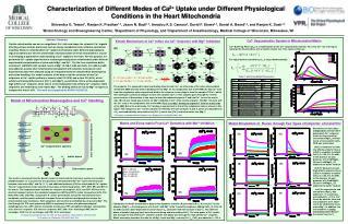 Model of Mitochondrial Bioenergetics and Ca 2+  Handling
