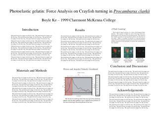 Photoelastic gelatin: Force Analysis on Crayfish turning in  Procambarus clarkii