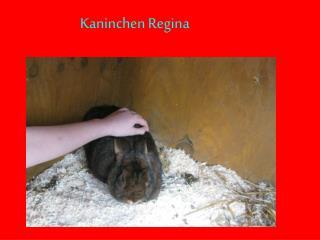 Kaninchen Regina