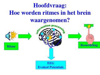 Hoofdvraag: Hoe worden ritmes in het brein waargenomen?