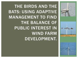 1.  birds, bats and windfarms: compatibility or Frenemies ?