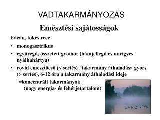 VADTAKARMÁNYOZÁS