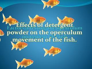 Factors affecting the operculum movement of a fish