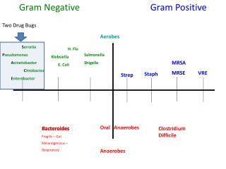 Gram Negative           Gram Positive