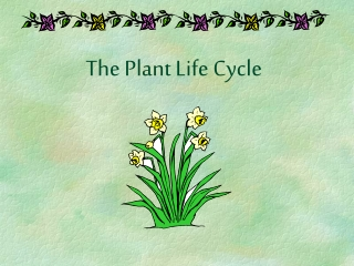 Plant Life Cycle Review