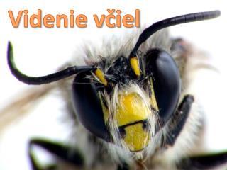 V id enie včiel