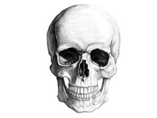 Lebka - Cranium