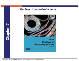 Bacteria : The  Proteobacteria