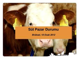 Süt Pazar Durumu Brüksel, 19 Ocak 2012