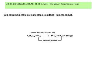 UD. III. BIOLOGIA CEL·LULAR.  Ll. III. 3. Met. i energia, 2: Respiració cel·lular