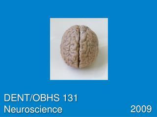 DENT/OBHS 131 Neuroscience