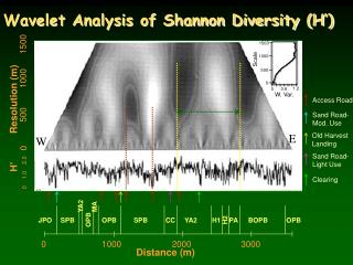 Wavelet Analysis of Shannon Diversity (H')