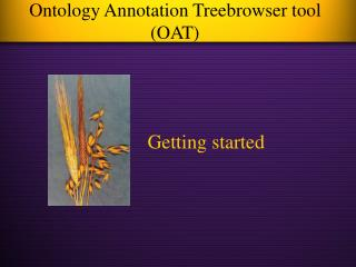 Ontology Annotation Treebrowser tool (OAT)