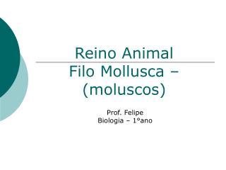 Reino Animal Filo Mollusca – (moluscos)