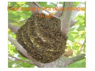 Evoluzione e vita della colonia di api