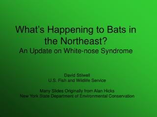 What's Happening to Bats in the Northeast? An Update on White-nose Syndrome