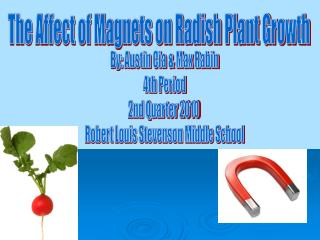The Affect of Magnets on Radish Plant Growth