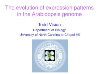 The evolution of expression patterns  in the Arabidopsis genome