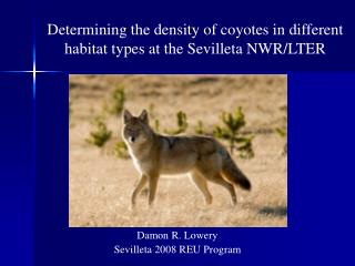 Determining the density of coyotes in different habitat types at the Sevilleta NWR/LTER