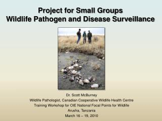 Project for Small Groups Wildlife Pathogen and Disease Surveillance