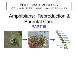 Amphibians:  Reproduction & Parental Care PART III