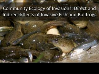Community Ecology of Invasions: Direct and Indirect Effects of Invasive Fish and Bullfrogs