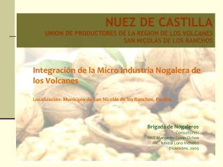 NUEZ DE CASTILLA UNION DE PRODUCTORES DE LA REGION DE LOS VOLCANES  SAN NICOLÁS DE LOS RANCHOS