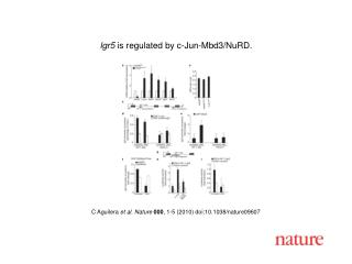 C Aguilera  et al. Nature 000 , 1-5 (2010) doi:10.1038/nature09607