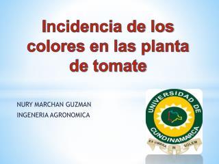 I ncidencia de los colores en las planta de tomate