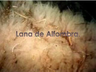 Lana de Alfombra.