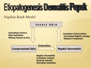 Etiopatogenesis  Dermatitis Popok