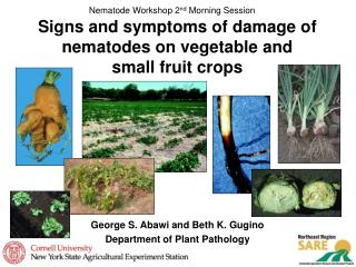 Signs and symptoms of damage of nematodes on vegetable and  small fruit crops